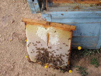 Làmina plena de mel