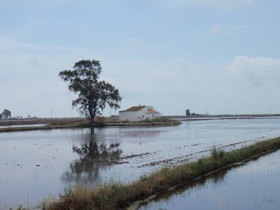 Arrossars i barraques típiques del Delta
