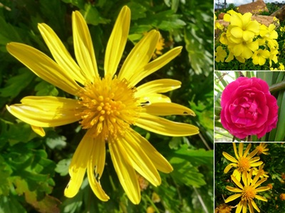 Ver flores sobral