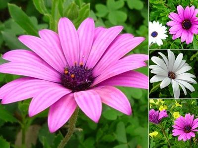 Ver flores sobral abelheira roxas