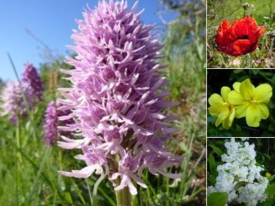 Ver flores 1