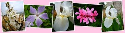 Ver flor1