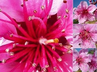 Ver flores macieira