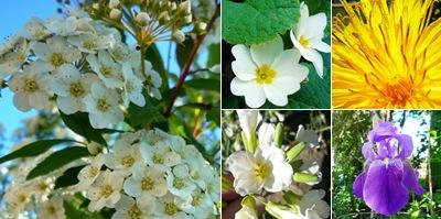 Ver Flores aldeias
