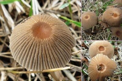 Ver cogumelos alqueidão