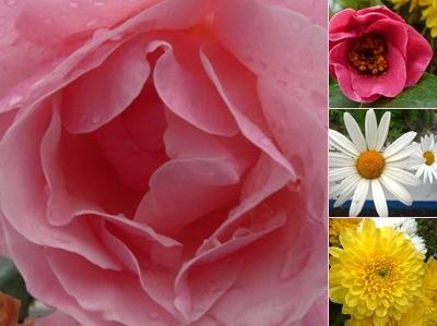 Ver flores lousa