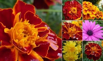 Ver flores ponte lousa