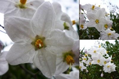 Ver Fotos flores aqueidão
