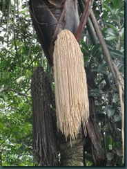 florestaruma03