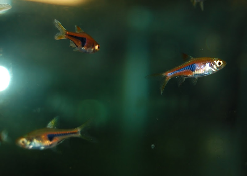 Some more fish and inverts for sale cool stuff 79746 for Cool fish for sale