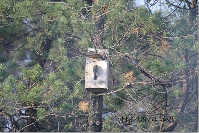 fugl i fuglekasse