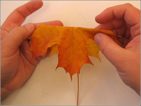 http://lh6.ggpht.com/_q6EEIoA3F3c/SpGIZ5t91II/AAAAAAAAABY/7BZYHuwc1Zs/s512/art-origami-rose-from-mapple-leaf-01.jpg