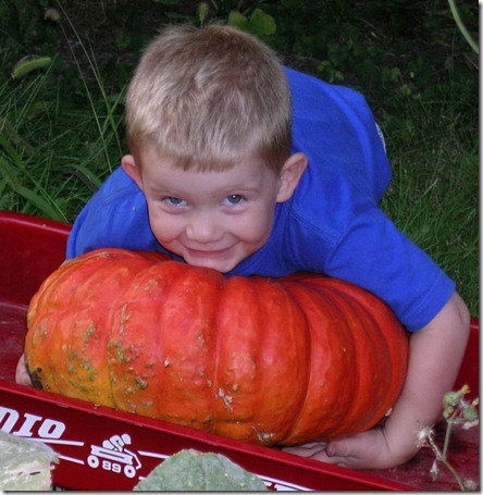 Picking Pumpkins 5