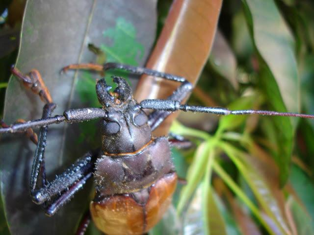 [Divers insectes] Insectes de Khao Sok... DSC03100