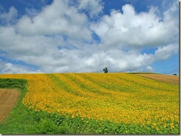 Japan-Hokkaido-Landscape-WUXGA_country_field_0150