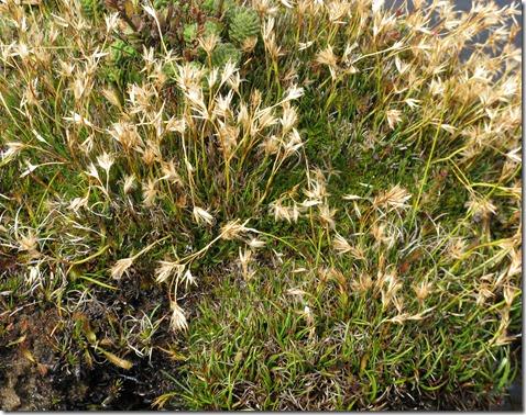 Grass on plateau