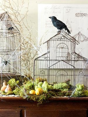 recuerdo como hace unos aos cuando me independiz me compr mi primera jaula de madera antigua para poner como un adorno ms en el saln de mi casa