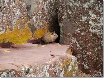 110224 Tiwanaku (16)