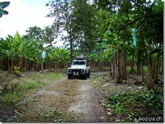 110412 Hacienda Bambusa (20)
