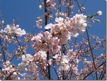 Springtime 096