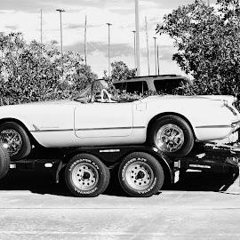 '54 'Vette Profile 1384F by Jim Suter - Transportation Automobiles (  )