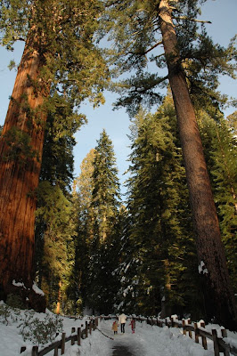 General sequoia