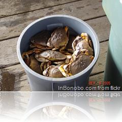Crab Bucket - Galeata de crabi