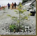SFPP-tree