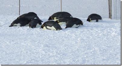 penguin pillows