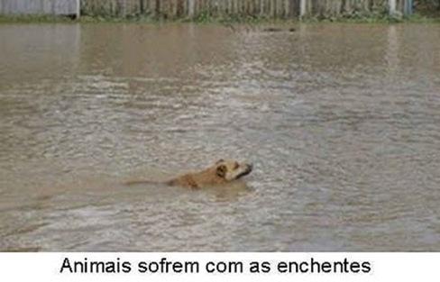 animais e enchentes