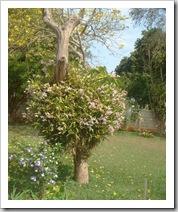 Floresta no sítio da Marili Campos (3)