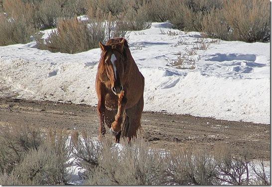 Antelope01-23-2011 091 (2)