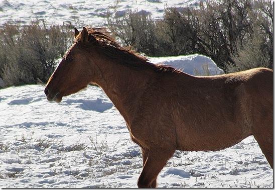 Antelope01-23-2011 108 (2)