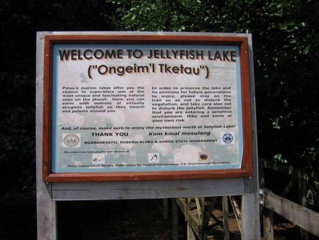 palau 03 Swim among thousands of Jellyfish