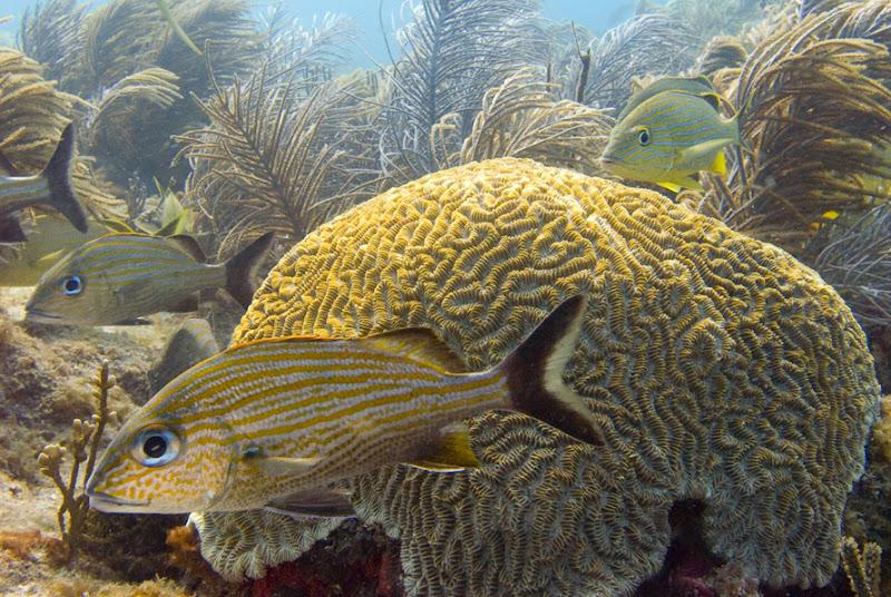 aquarium%20contest4 Mote Aquarium Reef Photo Contest
