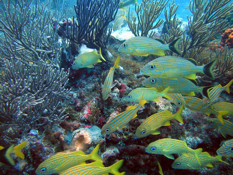 aquarium%20contest5 Mote Aquarium Reef Photo Contest