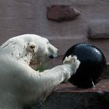 Eisbär (Vera)