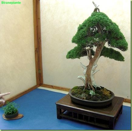 bonsai votato orto botanico