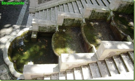 fontana 11 zampilli