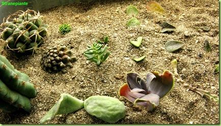 Talee in sabbia