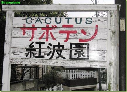 cacutus