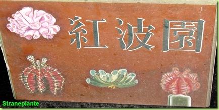 cartello dipinto giappone cactus