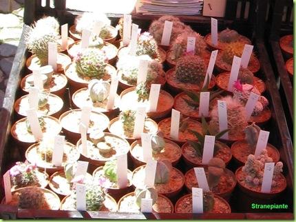 piante-grasse-friburgo