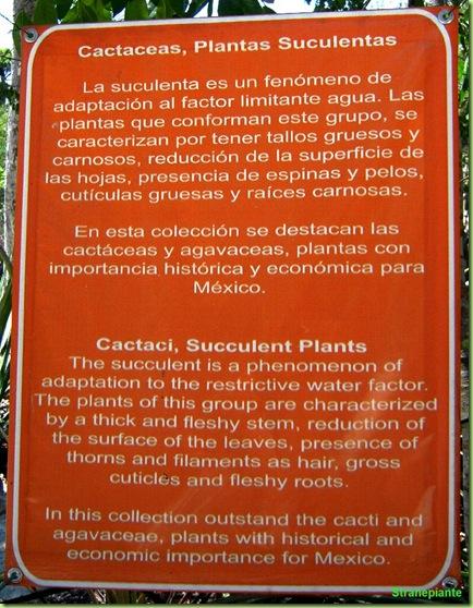 introduzione-cactus
