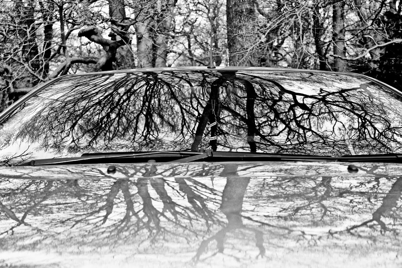 NC's week off! - Take time to reflect... - 31_tree_car