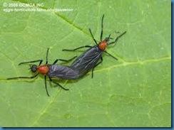 lovebugs2