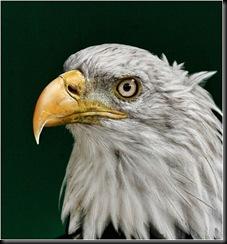 tt 40 3 Natural History 2