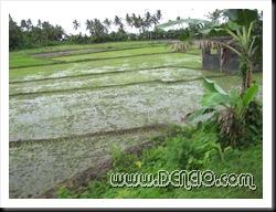 Bagong Araro