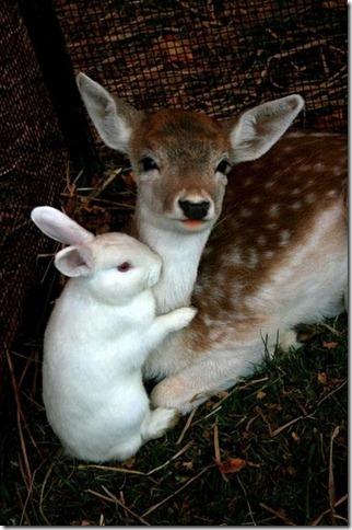 deer-rabit