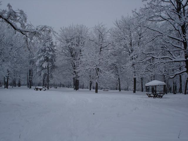 Zvezdarska šuma pod snegom